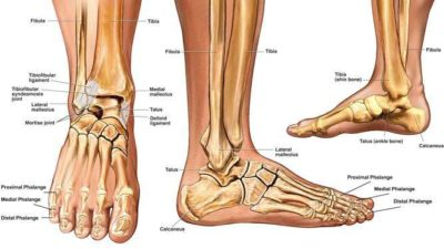 Ankle Fractures - Physio Direct NZ