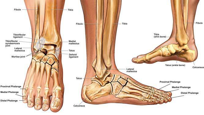 Ankle Fractures - Rural Physio at Your Doorstep | Physio Direct