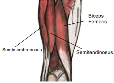 Understanding Hamstring Tears - Physio Direct NZ