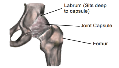 Hip Pain and Labral Tears - Physio Direct NZ