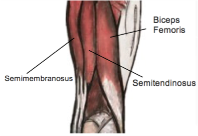 Hamstring Tears - Physio Direct NZ